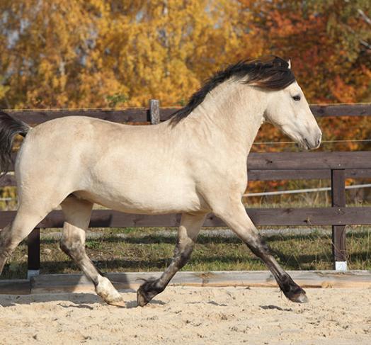 cours cheval à Saint-Pierre-Langers