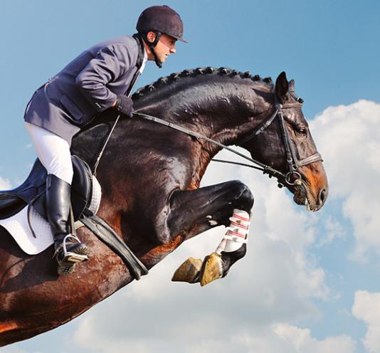 Compétitions équestres Saint-Pierre-Langers