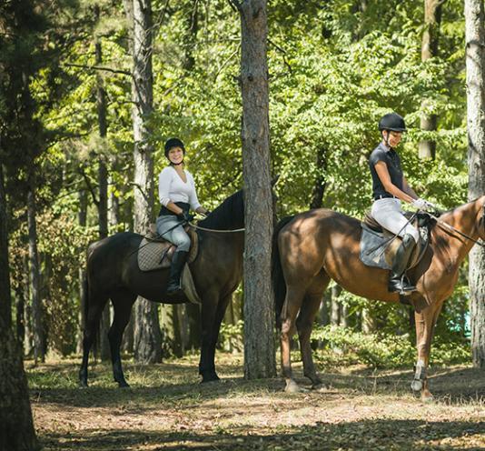 Activités cheval à Saint-Pierre-Langers