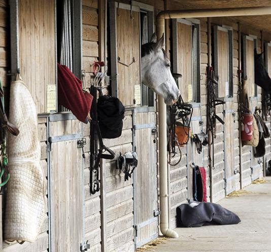 cours equitation Saint-Pierre-Langers