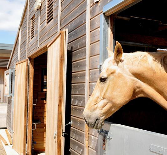 entrainement cheval Saint-Pierre-Langers